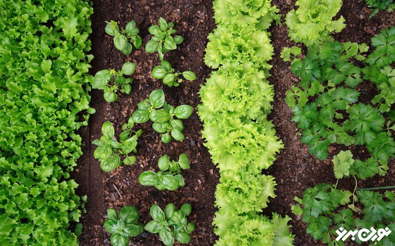 قدرت مزیت تجمعی در گیاهان