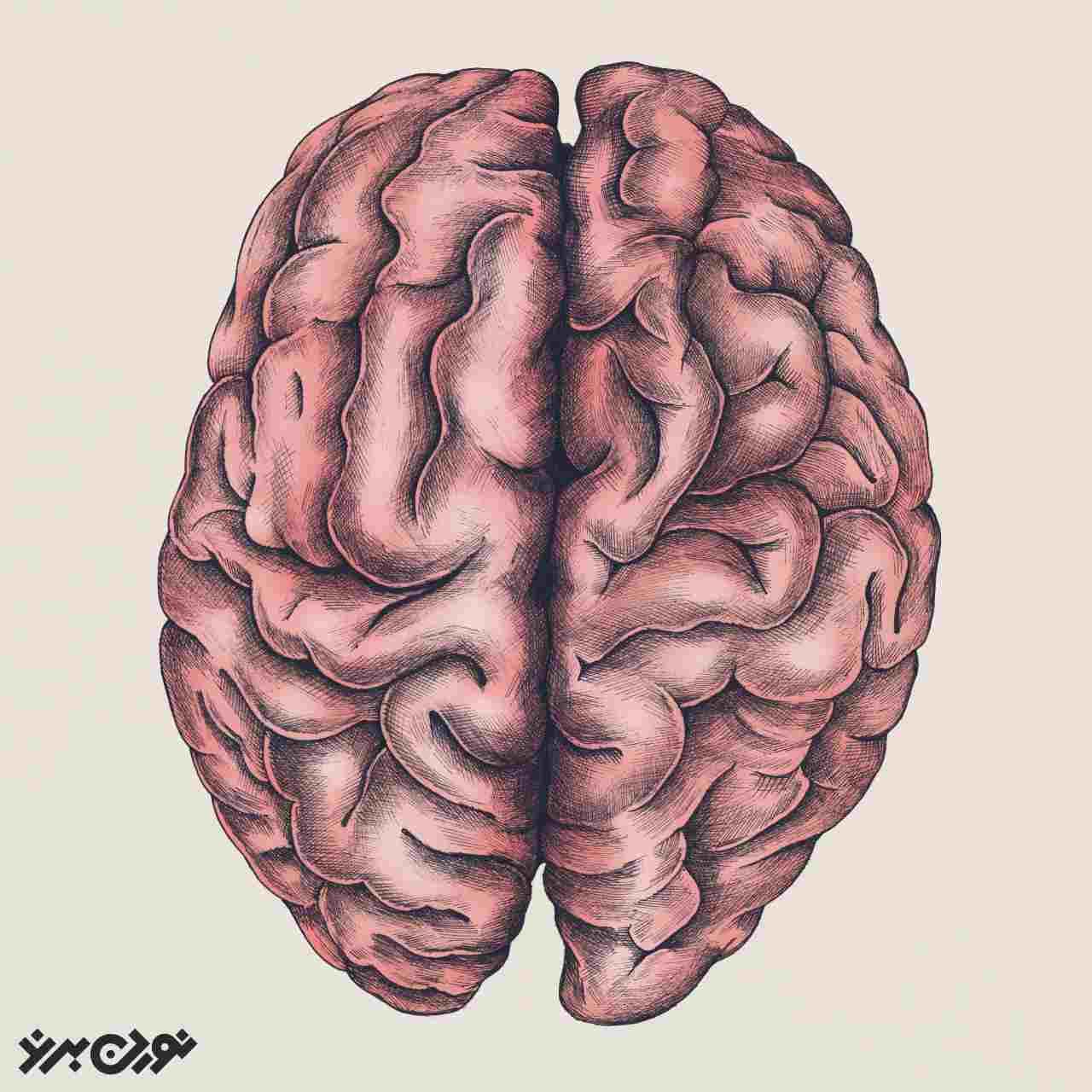 عادات شیارهایی در مغز ایجاد میکنند